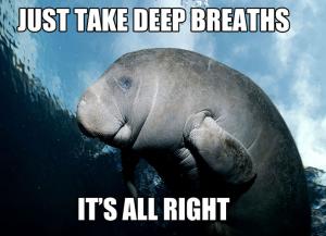 calming-manatee-meme